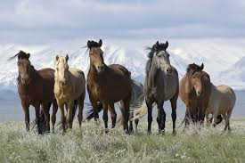 health care for horses