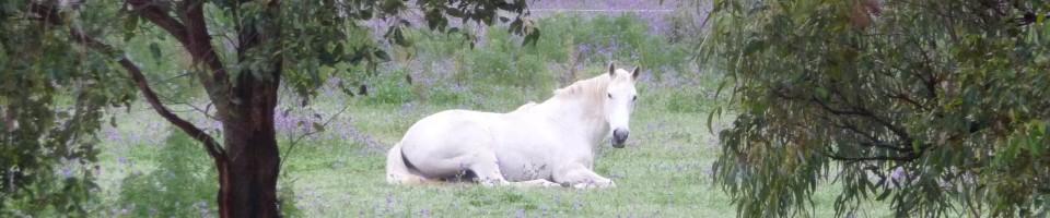 Natural Horses Health