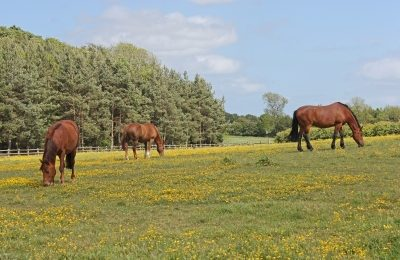 managing grazing