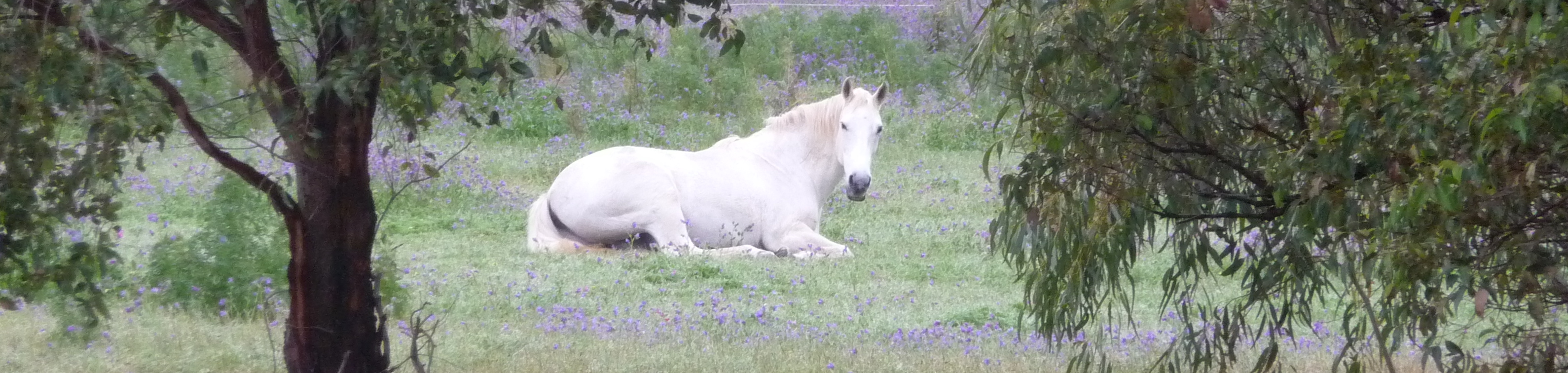 Vaccinosis and Your Horse