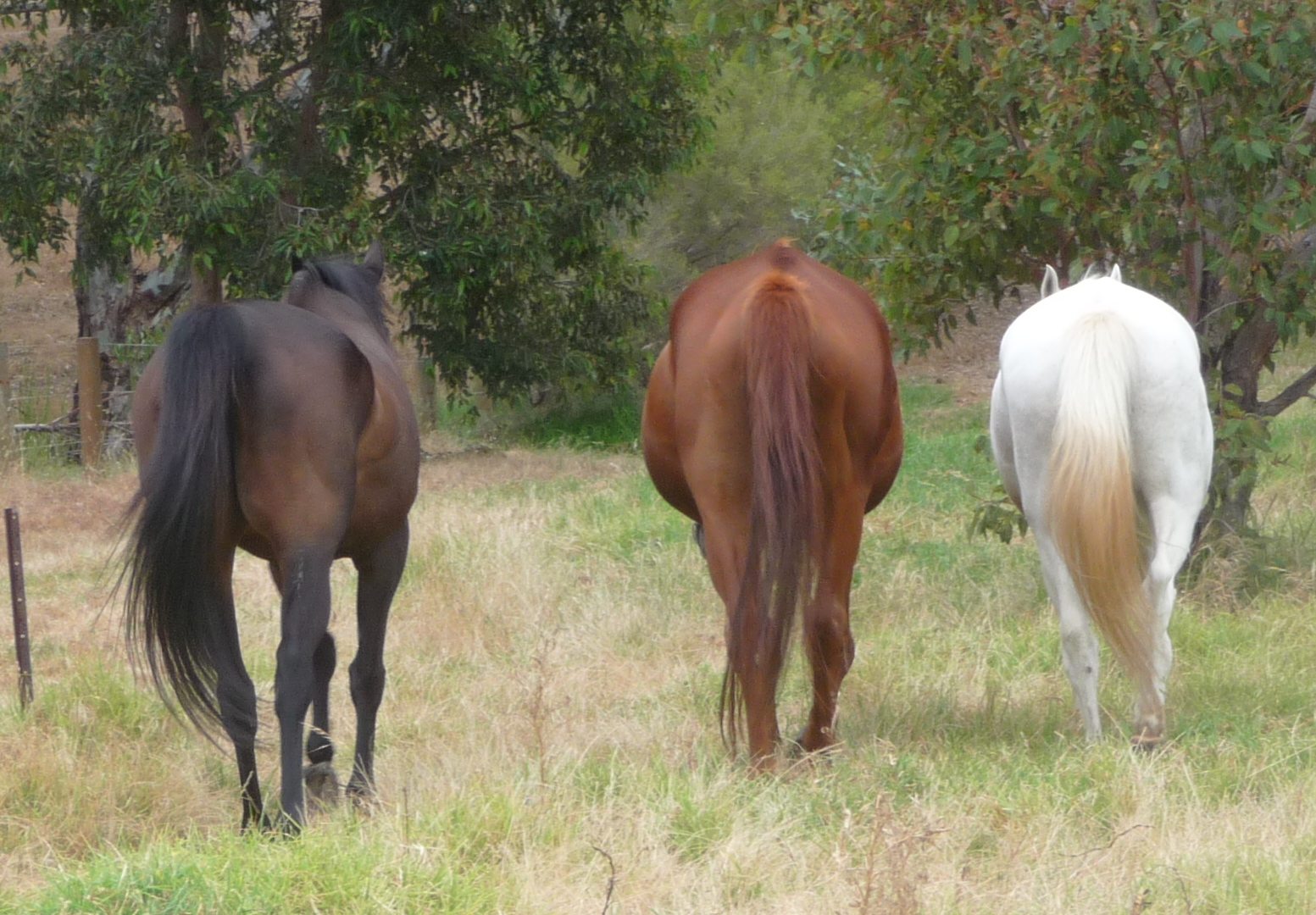 Are Joint Supplements For Horses The Answer You Want?