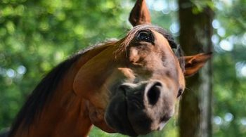 anxiety in horses